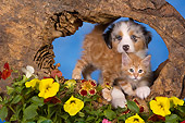 DOK 01 RK0419 01