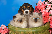 DOK 01 RK0420 01