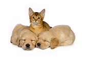 DOK 01 RK0422 01