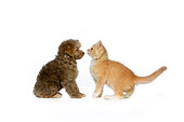 DOK 01 RK0424 01
