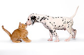 DOK 01 RK0425 01