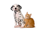 DOK 01 RK0427 01
