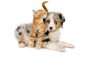 DOK 01 RK0432 01