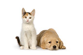 DOK 01 RK0445 01