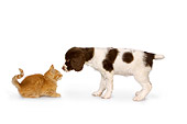 DOK 01 RK0448 01
