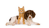 DOK 01 RK0451 01