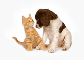 DOK 01 RK0454 01