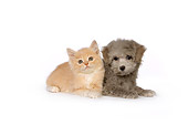 DOK 01 RK0460 01