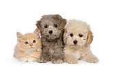 DOK 01 RK0461 01