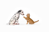 DOK 01 RK0463 01
