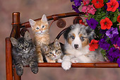 DOK 01 RK0465 01