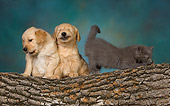DOK 01 RK0475 01