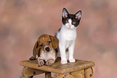 DOK 01 RK0484 01