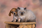 DOK 01 RK0486 01