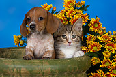 DOK 01 RK0488 01