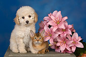DOK 01 RK0491 01