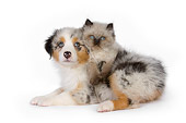 DOK 01 RK0503 01