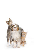 DOK 01 RK0508 01