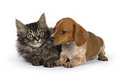 DOK 01 RK0528 01