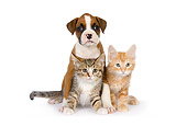 DOK 01 RK0532 01