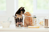 DOK 01 YT0004 01