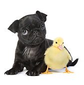 DOK 02 XA0006 01