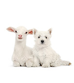 DOK 02 XA0024 01