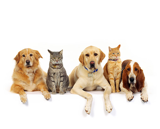 Group of dogs and cats - photo#14