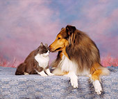 DOK 03 RK0041 03