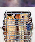 DOK 03 RK0047 03
