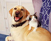 DOK 03 RK0063 03