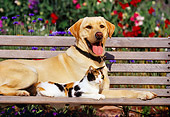 DOK 03 RK0080 13