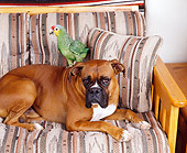 DOK 03 RK0087 01