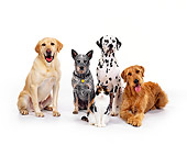 DOK 03 RK0113 10