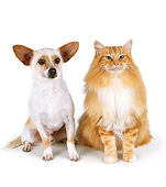 DOK 03 RK0116 08