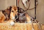 DOK 03 RK0141 16