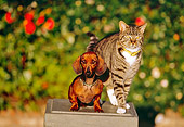 DOK 03 RK0188 13