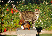 DOK 03 RK0188 14