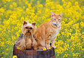 DOK 03 RK0193 04