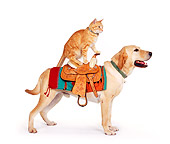 DOK 03 RK0207 05