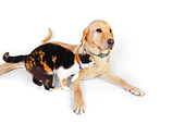 DOK 03 RK0225 01
