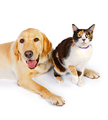 DOK 03 RK0227 01