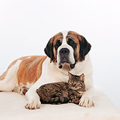 DOK 03 RS0010 06