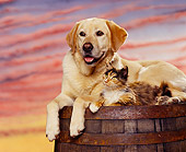 DOK 03 RK0054 06