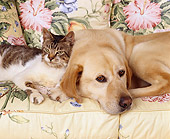DOK 03 RK0060 03