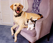 DOK 03 RK0064 06