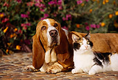 DOK 03 RK0081 02