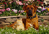 DOK 03 RK0084 09