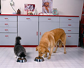 DOK 03 RK0101 08