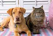 DOK 03 RK0118 05